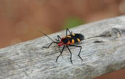 BEATIFULL昆虫 库存照片
