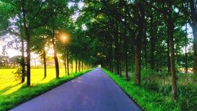Beatifull-Auflage innerhalb der Bäume mit Sonnenlicht und Landschaft Stockfotografie