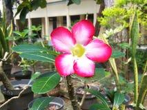 Beatifull blomma Arkivfoton