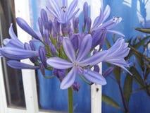 NATURA. Beatifull flower,Hermosa creacion de Dios Royalty Free Stock Photos
