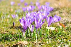 Beatifull flowers in spring season Royalty Free Stock Photos