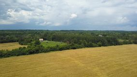 Beatifull wheat and grass field, country summer dark stormy clouds background. Aerial view of Beatifull wheat and grass field Flying with drone above country stock video