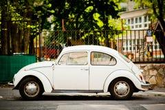 Beatle Стоковое Фото