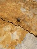 Beatle em uma parede dourada Fotografia de Stock