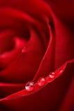 beatuful kropelek czerwieni róży woda Zdjęcia Stock
