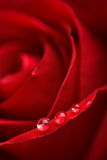 Beatuful red rose with water droplets stock photos
