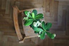 Beaty en bois vert de fleurs beau photo libre de droits