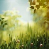 Beaty-Farben der Natur lizenzfreies stockbild