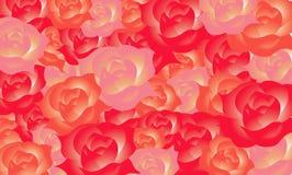 beaty rosa bakgrund Fotografering för Bildbyråer