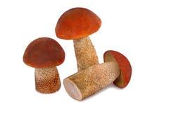 Beau ???????????? du champignon trois sur un CCB blanc Photo libre de droits