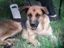 beau ‹noir heureux d'†de ‹d'†de chien égaré se trouvant sur l'herbe Images stock