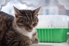 1 beau baldeet de chat sur la fen?tre photo libre de droits