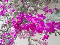 Beau baromètre Bush Image libre de droits
