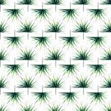 Beau beau modèle de fines herbes floral merveilleux mignon tropical vert d'été d'Hawaï d'une aquarelle de paumes Images stock