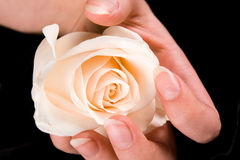 Beau blanc rose et main Photos libres de droits