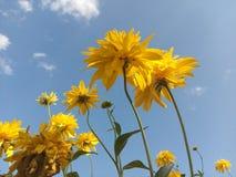 Beau, bleu, clair, plan rapproché, nuage, nuages, couleur, flore, fleur, fleurs, vert, la vie, macro, pré, nature, parc, usine, S Photo stock