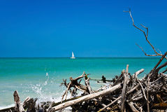 Beau bois de flottage superficiel par les agents Images libres de droits