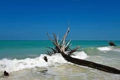Beau bois de flottage superficiel par les agents Image stock