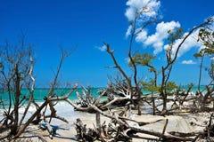 Beau bois de flottage superficiel par les agents Image libre de droits