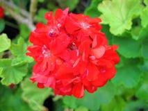 Beau bouquet Images stock