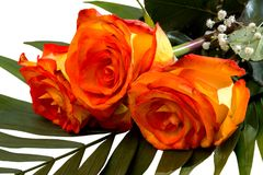 Beau bouquet de trois roses jaune-rouges Image libre de droits