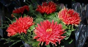 Beau bouquet des fleurs images libres de droits