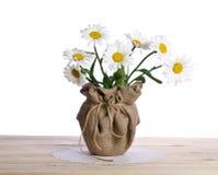 Beau bouquet des fleurs de camomille dans le pot de fleurs Photo libre de droits