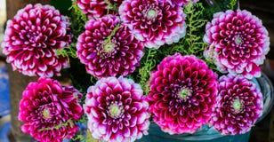 Beau bouquet des fleurs de dahlia image stock