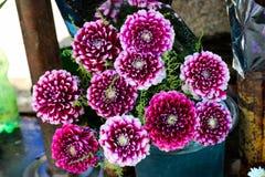 Beau bouquet des fleurs de dahlia photo stock