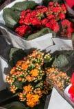 Beau bouquet des fleurs de divers types images libres de droits