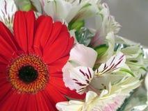 Beau bouquet des gerberas rouges et blancs au printemps Images stock