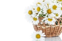 Beau bouquet des marguerites blanches Images libres de droits