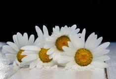 Beau bouquet des marguerites sensibles de fleurs blanches sur brillant merci Image stock