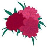 Beau bouquet des pivoines roses avec les feuilles vertes Photos libres de droits