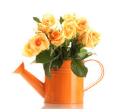 Beau bouquet des roses dans le bidon d'arrosage Photos libres de droits