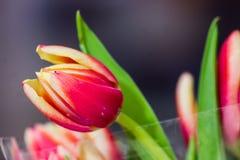 Beau bouquet des tulipes Photographie stock libre de droits