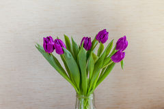 Beau bouquet des tulipes pourpres sur le fond blanc Photo stock