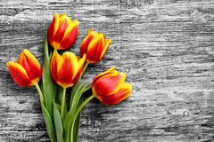 Beau bouquet des tulipes rouges et jaunes huitième festival en mars Photographie stock libre de droits