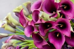 Beau bouquet des zantedeschias. Images stock