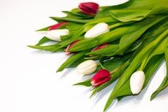 Beau bouquet frais des fleurs de tulipe d'isolement sur le fond blanc avec l'espace de copie images stock