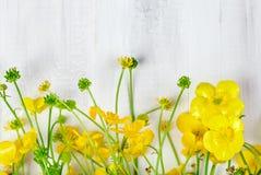 Beau bouquet jaune de renoncule se trouvant sur les conseils en bois blancs Images libres de droits
