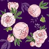 Beau bouquet tiré par la main des pivoines roses sur un fond pourpre imprimant sur le tissu, textiles, décor Pivoine sans couture photo stock