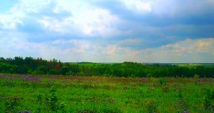 Beau bourdon aérien tiré d'un champ vert avec des fleurs banque de vidéos