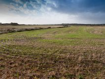Beau bout droit de paysage de champ de ferme en dehors de la rotation d'été Image libre de droits
