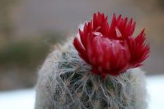 Beau cactus photos stock