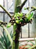 Beau cactus Photographie stock libre de droits