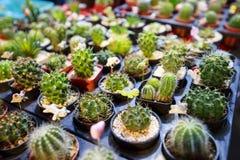 Beau cactus Image stock