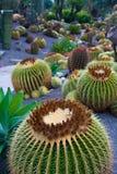 Beau cactus dans le jardin botanique de Giardini Ravino sur des ischions île, Italie Photos libres de droits