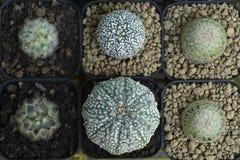 Beau cactus embranché comme fond images stock