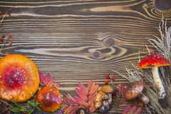 Beau cadre des matériaux naturels, champignons, cônes, feuilles d'automne, agarics de mouche, baies Images stock